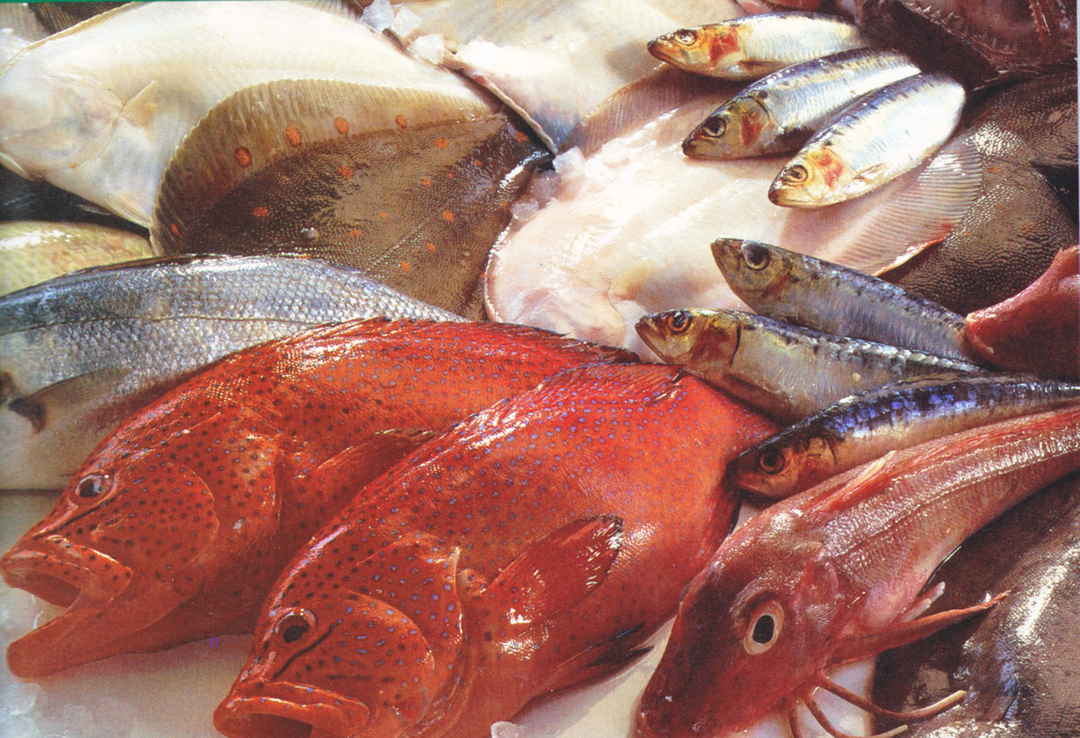 tip of the week buying and storing seafood chef kevin ashton