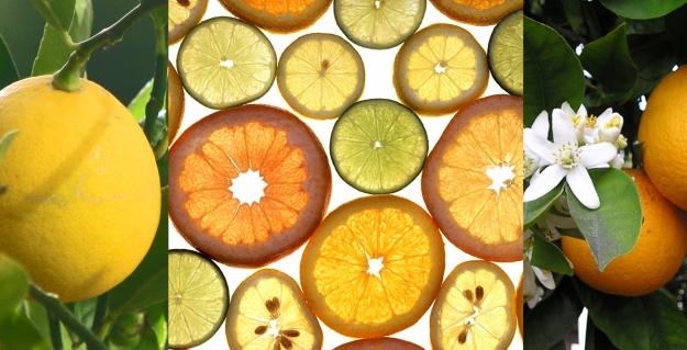 Citrus_fruitswiki