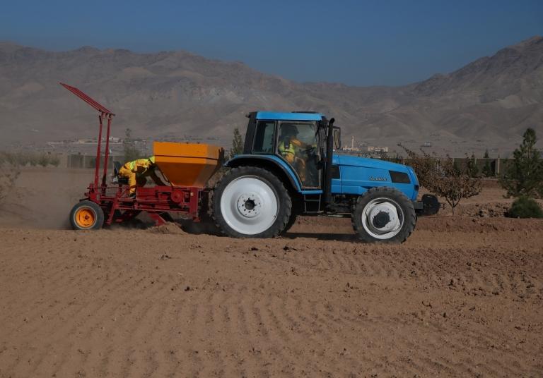 Afghan Saffron farming